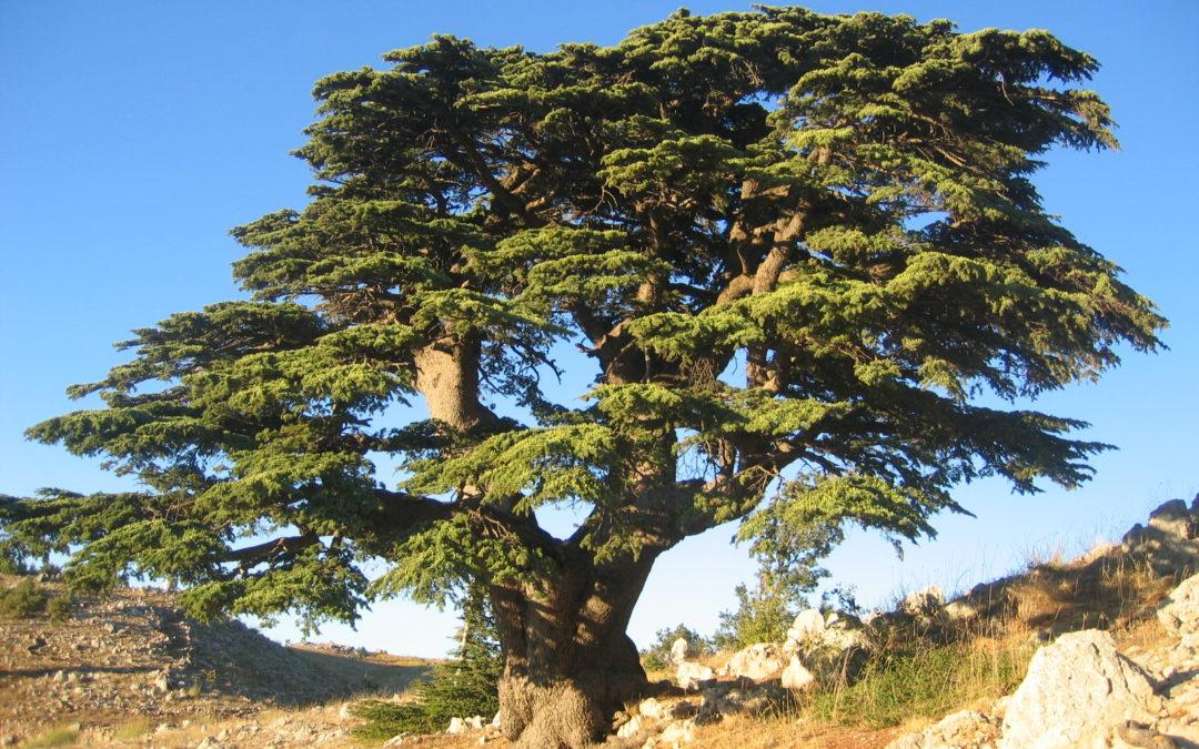 Actu : le Prix de la Prévention des Conflits et la Paix au Liban 2018